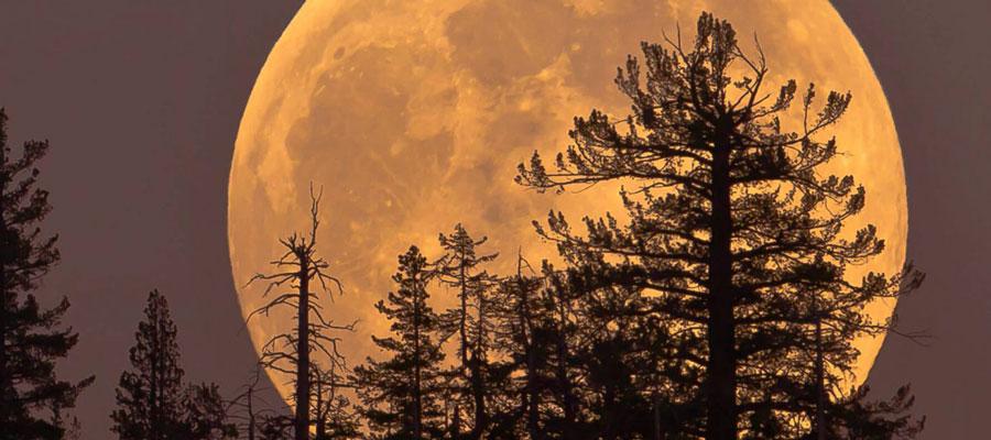 Full Moon Romance Canadian Slot Review 2017