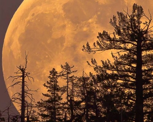Cast A Spell On A Full Moon - How To Make A Spell More Effective Like Magic